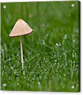 Lonely Mushroom Acrylic Print by Miguel Capelo