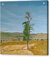 Lonely Tree In Africa Acrylic Print