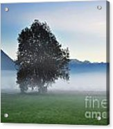 Lonely Tree In The Fog Acrylic Print