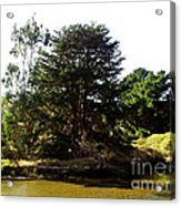 Lonelytree  Acrylic Print