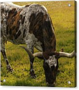 Long Horn Mid Fall Acrylic Print