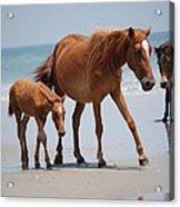 Long Walks On The Beach Acrylic Print