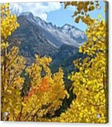 Long's Peak And The Keyboard Of The Winds Amidst Aspen Gold Acrylic Print by Margaret Bobb