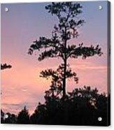 Lonley Tree Acrylic Print