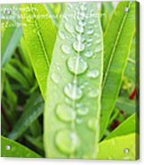 Look Deep Into Nature Acrylic Print