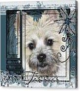 Look In Her Eyes - Cairn Terrier Acrylic Print by Renae Laughner