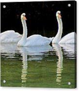 Look Over There Acrylic Print