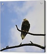 Look Up At The Eagles Acrylic Print