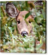 Look What I Found In My Garden Acrylic Print