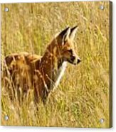 Lookin' For Lunch Acrylic Print