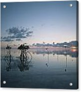 Looking Out To Sea Past Mangrove Shoots Acrylic Print