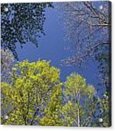 Looking Up In Spring Acrylic Print