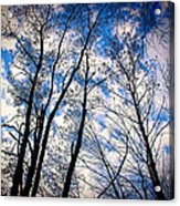 Looking Up When You're Down Acrylic Print