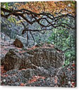 Lost Maples Hiking Trail Acrylic Print