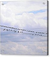 Lots Of Birds On Wires Acrylic Print