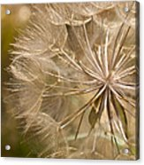 Lots Of Wishes Acrylic Print