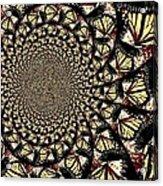 Lotsa Butterflies  Acrylic Print