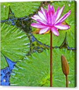 Lotus Blossom And Water Lily Pads Acrylic Print