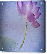 Lotus Dream Acrylic Print by Jill Balsam