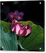 Lotus--echoes Of Light 24h Acrylic Print