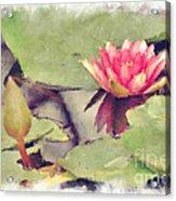 Lotus Flower12 Acrylic Print