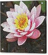 Lotus In The Rain 3 Acrylic Print