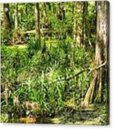 Louisiana Wetland Acrylic Print