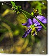 Louisiana Wildflower Acrylic Print