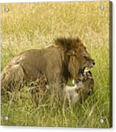 Love In The Wild Acrylic Print