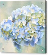 Love Letter Vii Hydrangea Acrylic Print by Jai Johnson