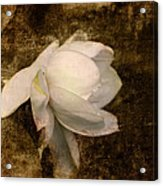 Love Letter Viii Cape Jasmine Gardenia Acrylic Print by Jai Johnson