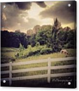 Love This Photo Of A #horse On A #hill Acrylic Print by Pete Michaud