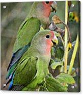 Lovebird Couple  Acrylic Print