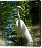 Lovely Bird Acrylic Print