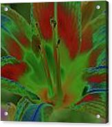 Lovely Lilly Acrylic Print