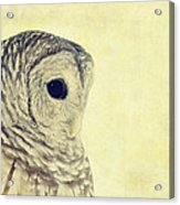 Lovely Lucy Barred Owl Acrylic Print