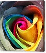Lover's Rose Acrylic Print