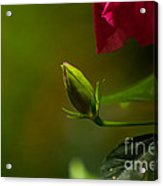 Loves' Bloom Acrylic Print