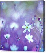 Lovestruck In Purple Acrylic Print