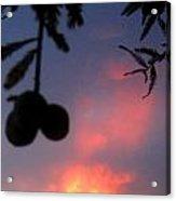 Low Hanging Fruit Acrylic Print by Juliana  Blessington