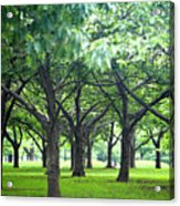 Low Trees In Flushing Meadows-corona Park Acrylic Print by Ryan McVay