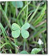 Luck To All Acrylic Print