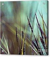 Luminis 02 - S01a Acrylic Print