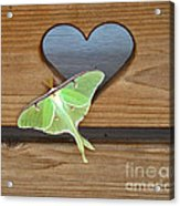 Luna Moth In Love Acrylic Print