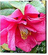 Luscious Pink Hdr Acrylic Print