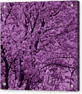 Lush Lavender Acrylic Print