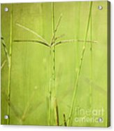 Lush Acrylic Print by Neil Overy