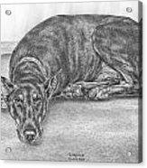 Lying Low - Doberman Pinscher Dog Art Print Acrylic Print by Kelli Swan