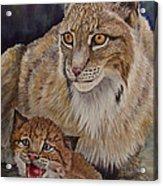 Lynx Mom And Baby Acrylic Print