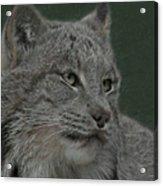Lynx Painterly Acrylic Print